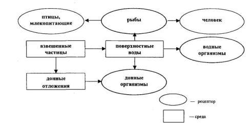 Упрощенная схема биогеохимической пищевой цепи в водных экосистемах.